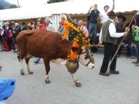 geschmückte Kuh
